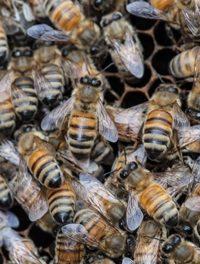 Backyard Beekeeping Gains Fans
