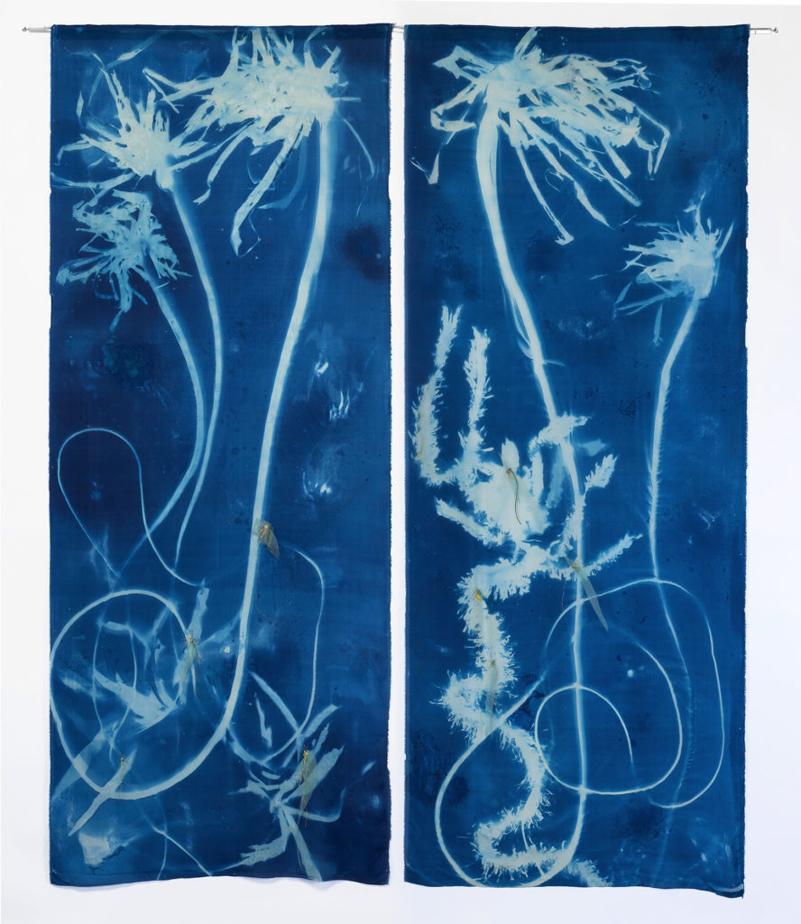 Sea Forest 4 & 5 by Ann Holsberry